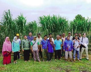 Preservation of Peat Swamp Forests in Indonesia