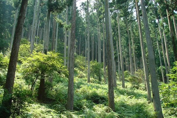 トヨタ三重宮川山林