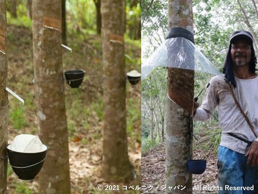 環境保全に向けたインドネシアゴム農家への環境教育及び生産性向上のための技術指導