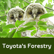 Toyota's Forestry