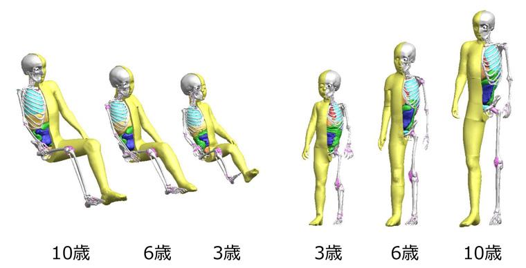トヨタ自動車 バーチャル人体モデル thums に 子ども モデルを追加