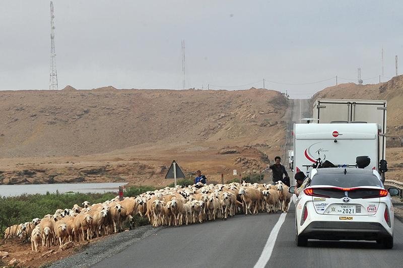 The Prius PHV reaches the Tarfaya Wind Farm in southwestern Morocco