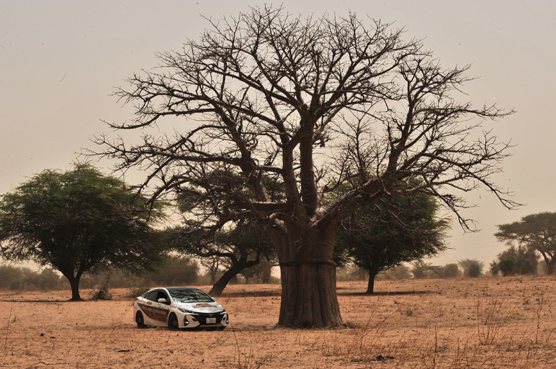 The Prius PHV rests under the baobab tree