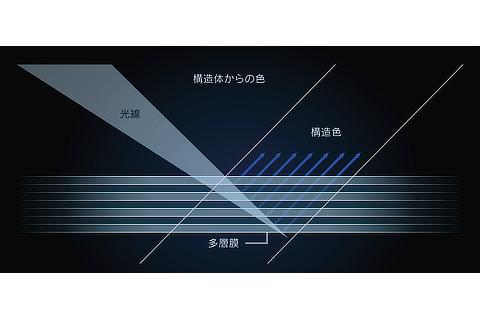 ストラクチュラルブルーの構造発色の原理