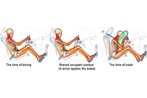THUMS Version 6 (Braced posture)