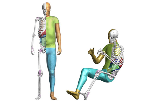 Toyota Offers Free Access to THUMS Virtual Human Body Model Software