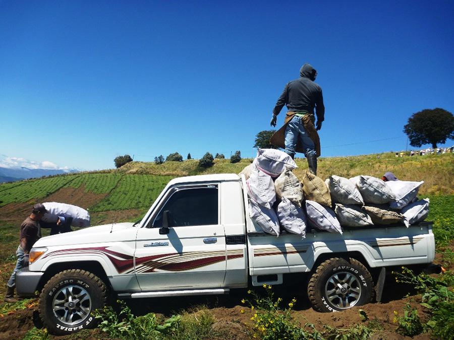 コスタリカの農場