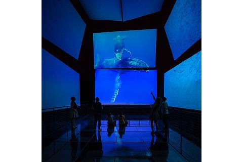 Bruce Work Image PANAMARAMA immersive experience Biomuseo Panama